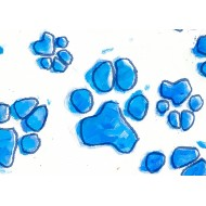 Blue Paw Print - gift tag GT011